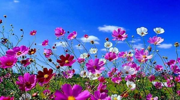 Quelques fleurs printanières  pour vous !