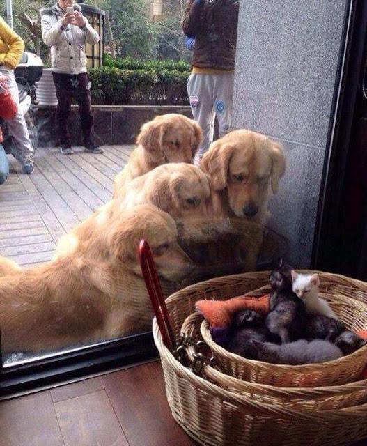 Tendresse animale   ...   trop mignons !