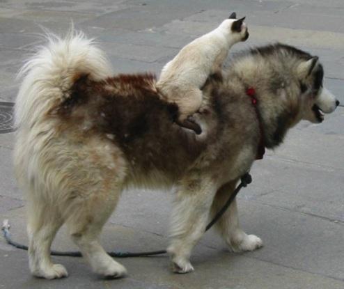 Comme chiens et chats    ...   trop mignons !