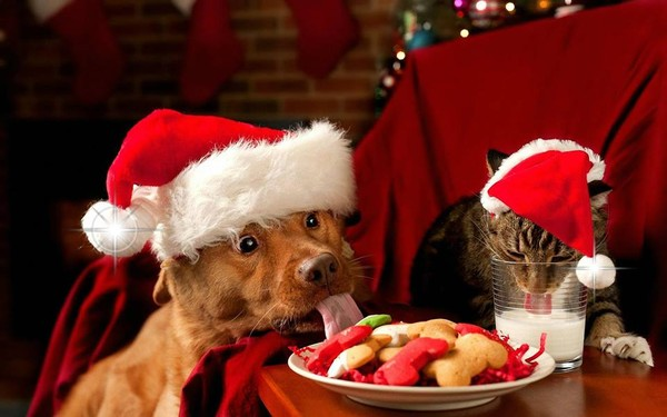 N'en faites surtout pas des cadeaux de Noël  ...