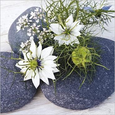 Ces fleurs pour vous  ...  si vous aimez !