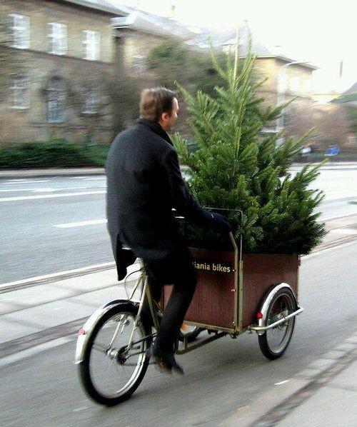 Si ce n'est déjà fait   ...   pensez au sapin de Noël  !