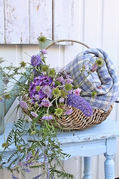 La lavande de Provence   ...    rime avec vacances !