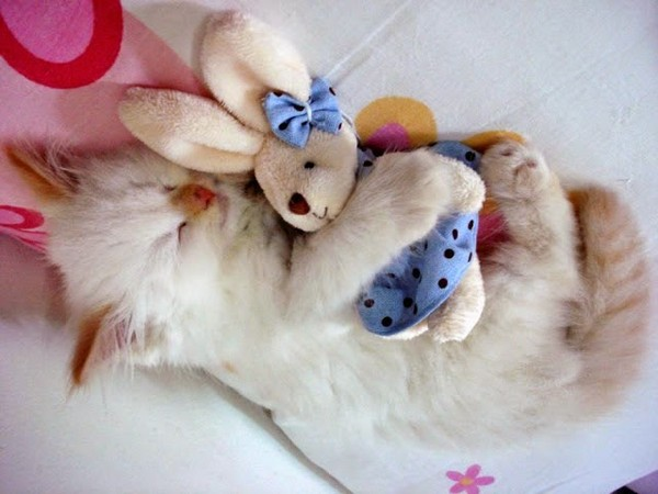 Tendresse animale   ...   chats alors trop mignons !