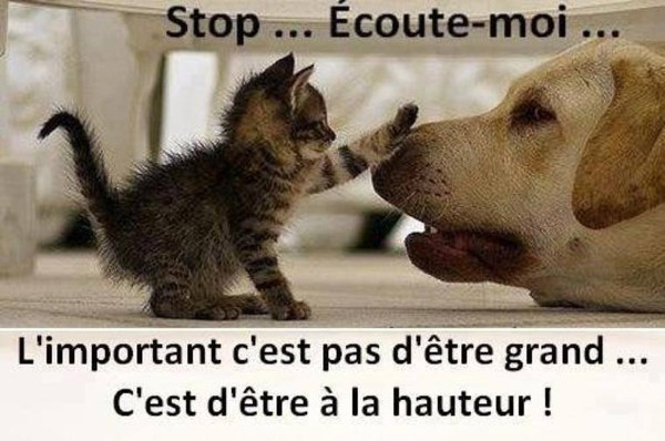Juste pour le fun   ...    tendresse animale !