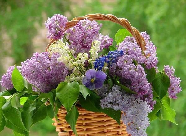 Une corbeille de fleurs  ...  pour vous qui passez ici  !