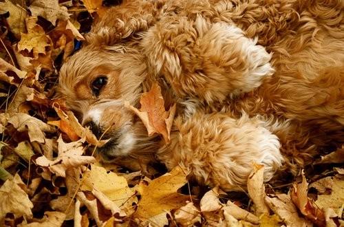 Les feuilles d'automne    ...   emportées par le vent !