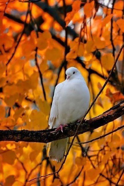 Bonne journée d'automne   ...