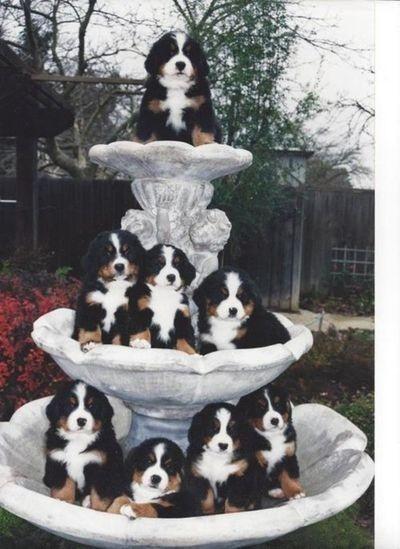 """Une fontaine   ...   """" qui a du chien """"   !"""