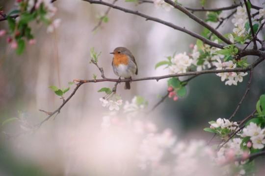 A la rencontre du printemps maurice careme