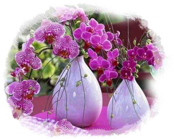 Des orchidées   ...    pour vous qui passez me voir !