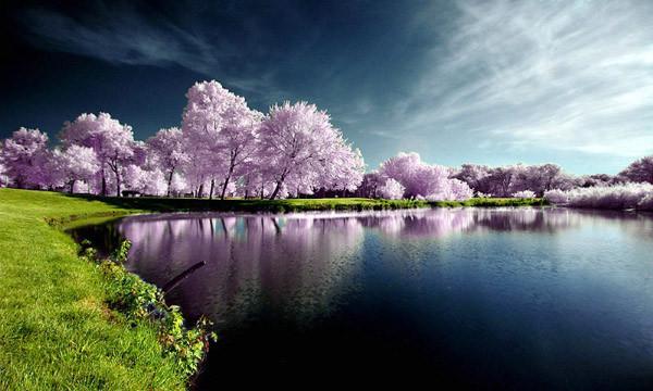 les-belles-photos-de-la-nature
