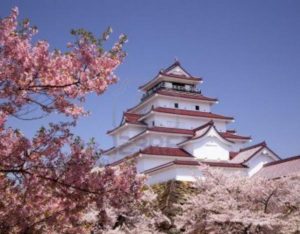 Japon De Magnifiques Cerisiers En Fleurs Fond D Ecran Fleur
