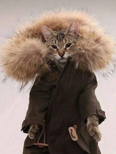 Chat alors   ...    fait pas chaud aujourd'hui !