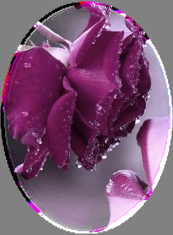 Cette rose est pour toi  ...  toi et toi aussi !