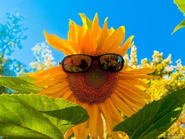 Je vous envoie plein de soleil  ...  dans le coeur !