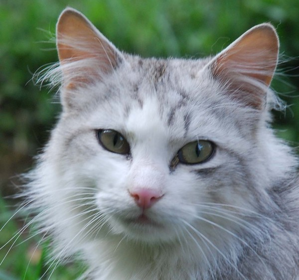 Mille et une raisons d'aimer   ...   les chats  !