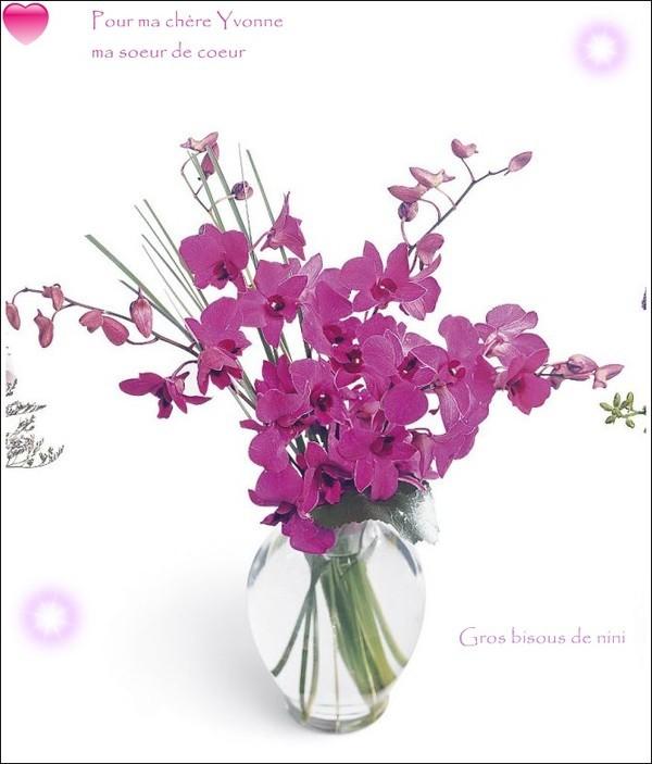 Orchidees De Ma Soeur De Coeur Centerblog
