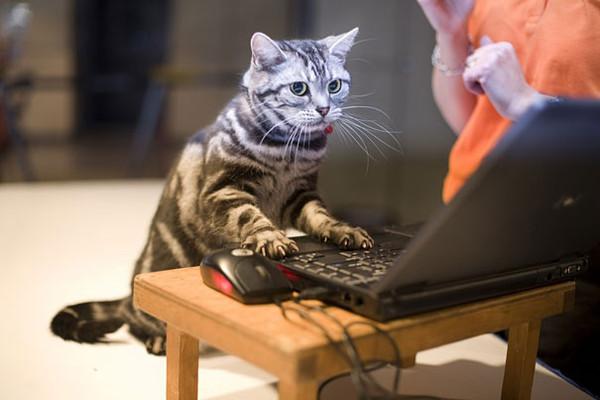 Images drôles   ...    comme chiens et chats  !
