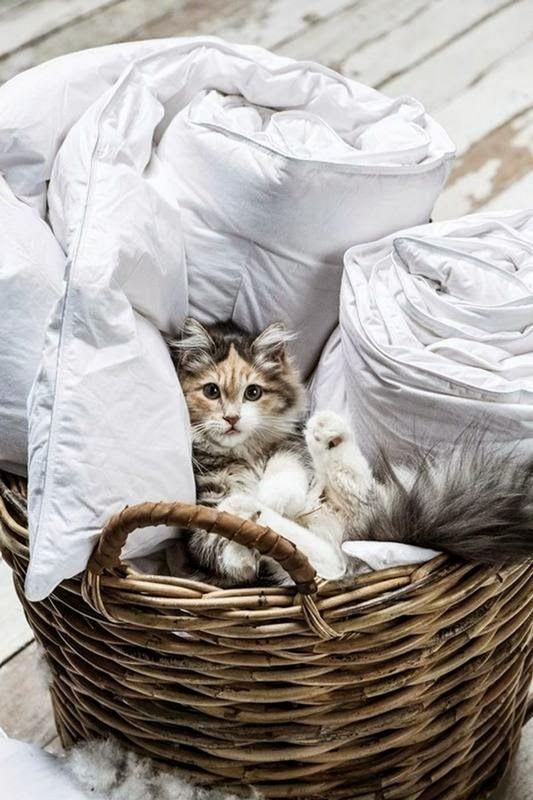 Chats alors    ...   c'est trop mignon  !