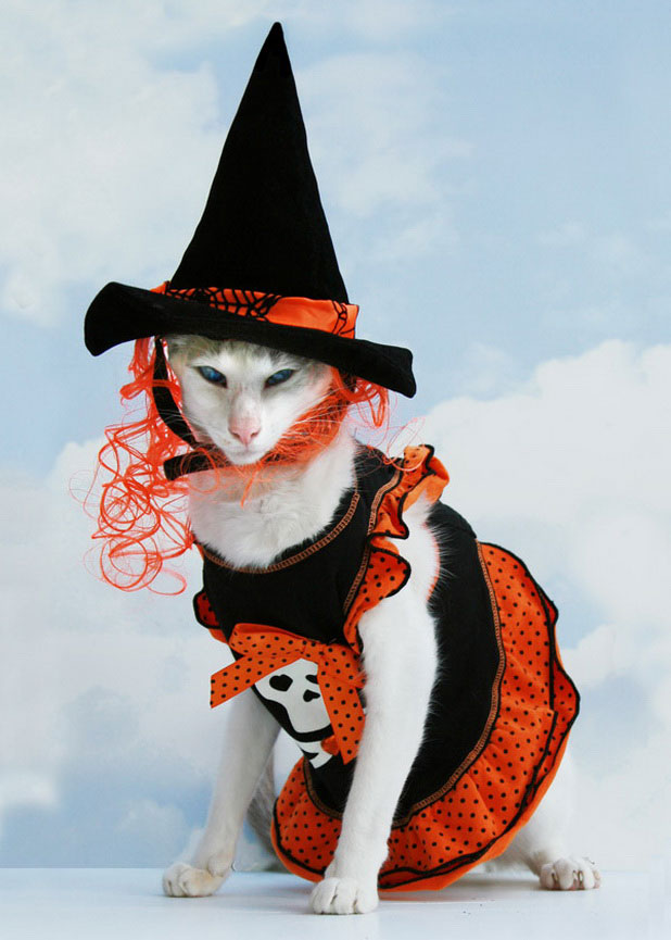 Костюмы кошки для хэллоуина