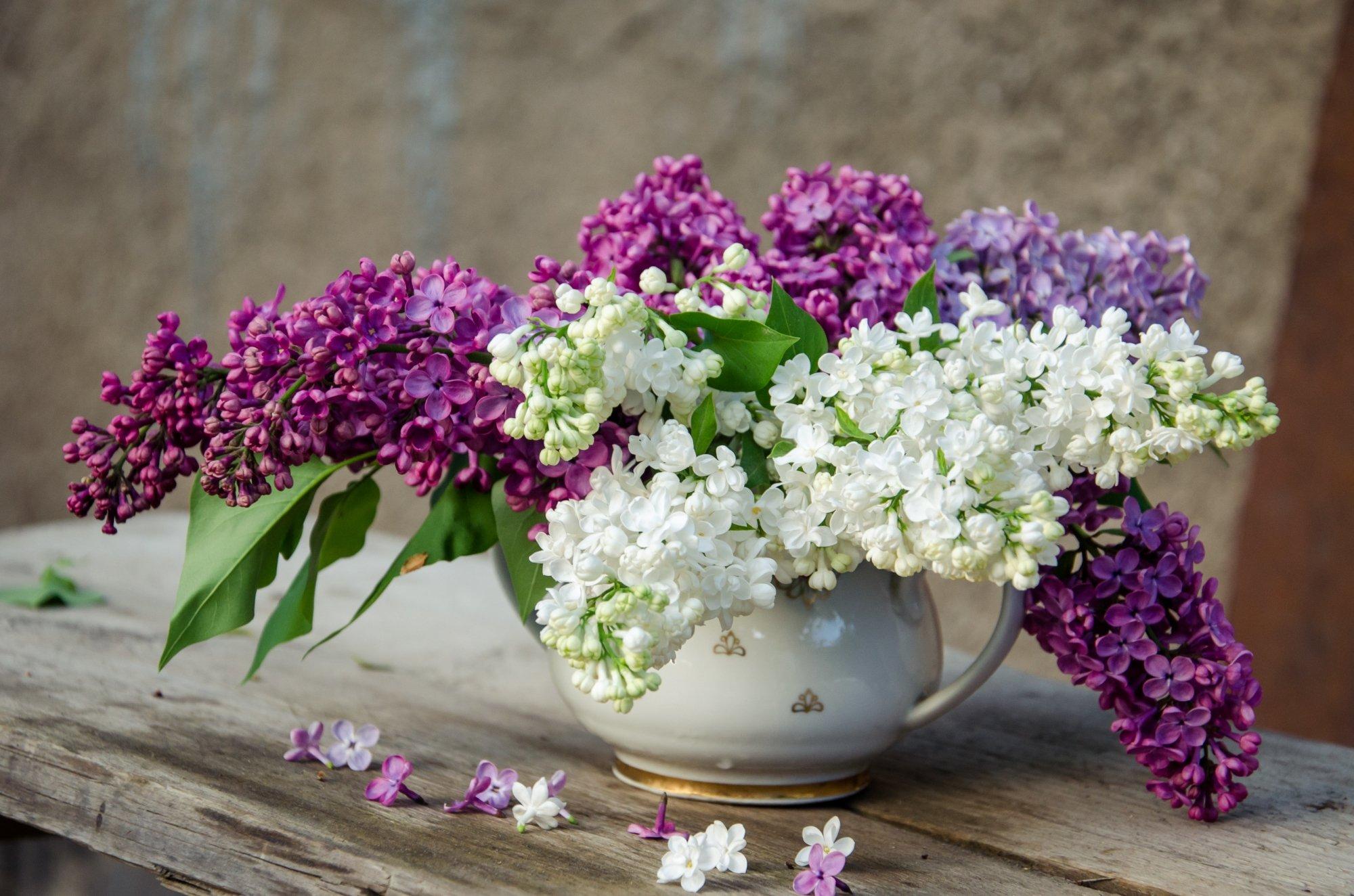 fleurs et leur langage  le lilas !