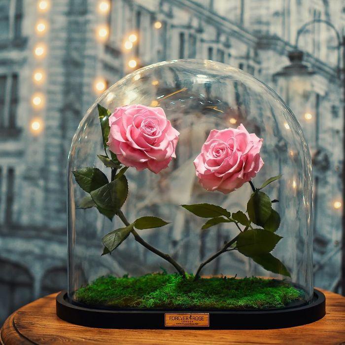 roses immortelles la belle et la b te. Black Bedroom Furniture Sets. Home Design Ideas